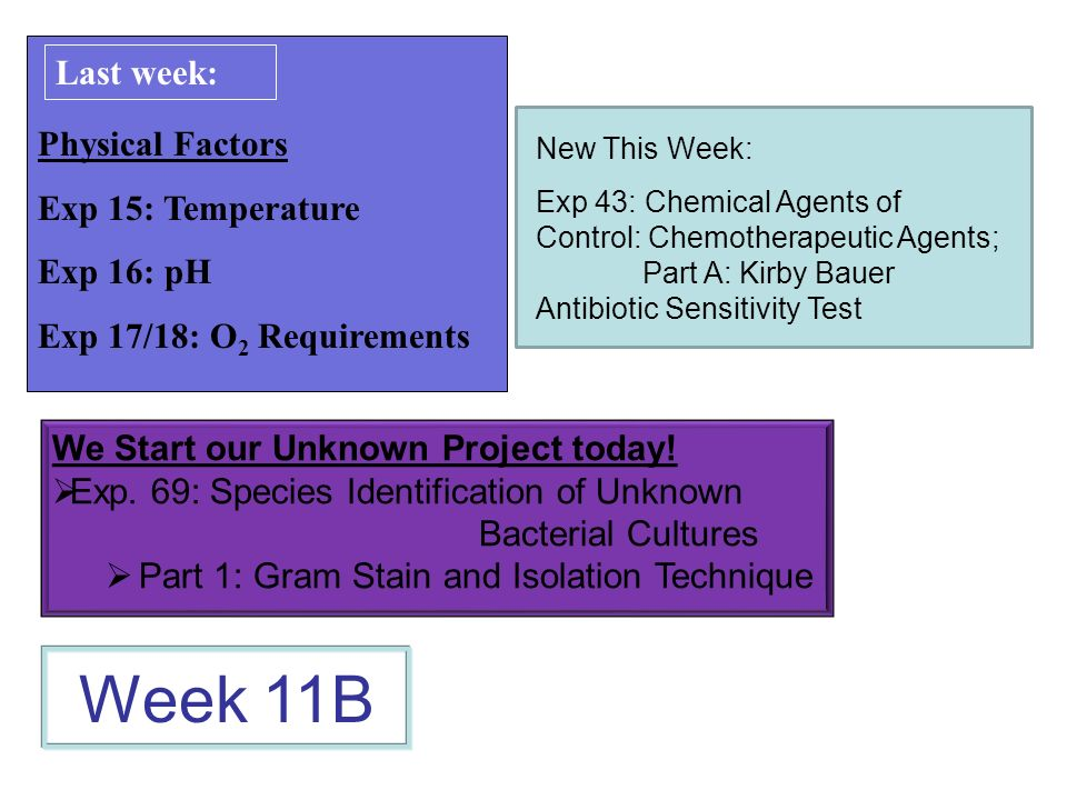 Physical Factors Exp 15: Temperature Exp 16: pH Exp 17/18: O 2 Requirements Week 11B Last week: We Start our Unknown Project today! Exp. 69: Species I