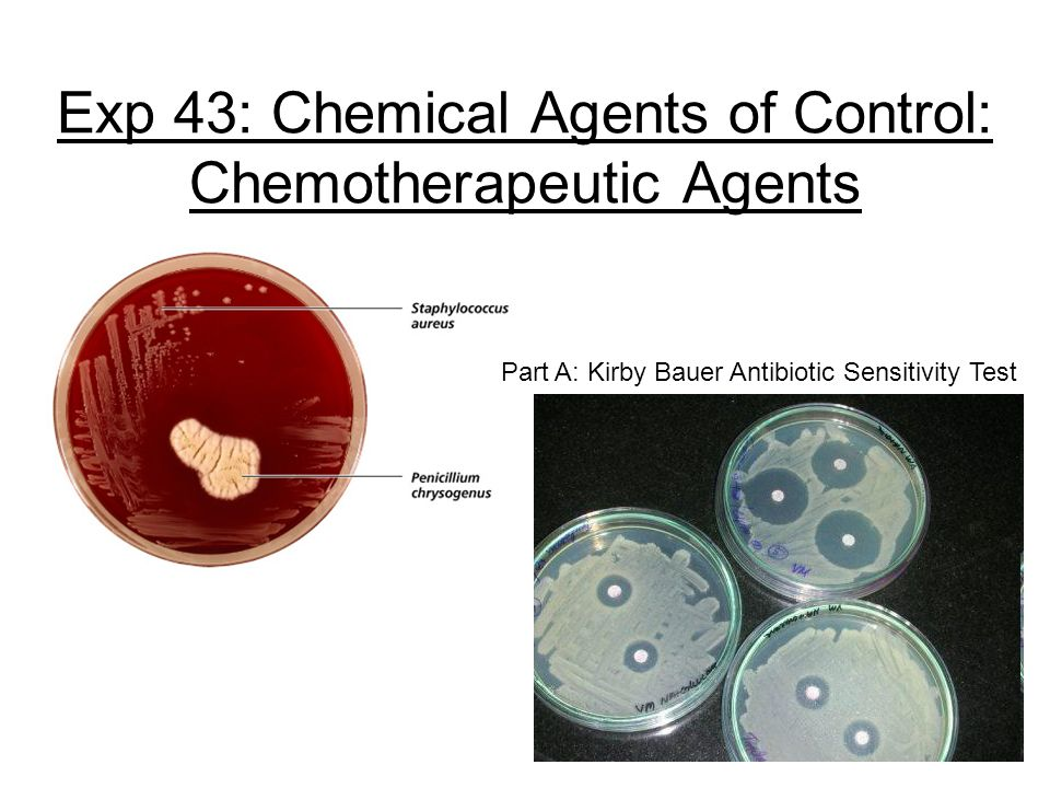 Exp 43: Chemical Agents of Control: Chemotherapeutic Agents Part A: Kirby Bauer Antibiotic Sensitivity Test