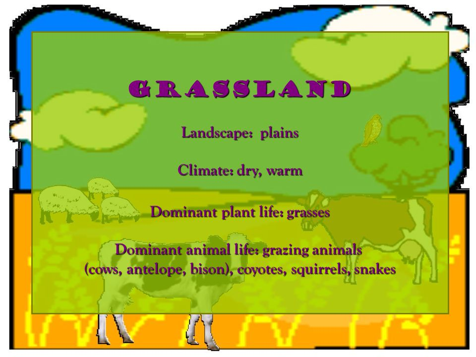 grassland Landscape: plains Climate: dry, warm Dominant plant life: grasses Dominant animal life: grazing animals (cows, antelope, bison), coyotes, sq
