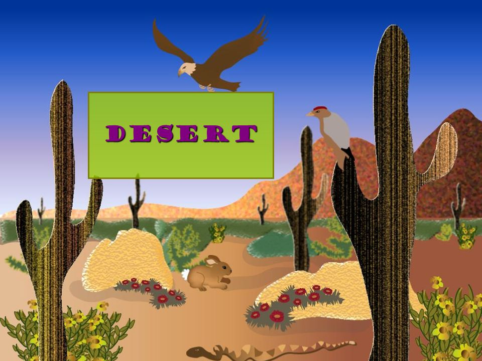 Desert Landscape: rocky and sandy Climate: hot and dry Dominant plant life: cactus, small shrubs Dominant animal life: reptiles, birds, rodents, sheep Main feature: dry