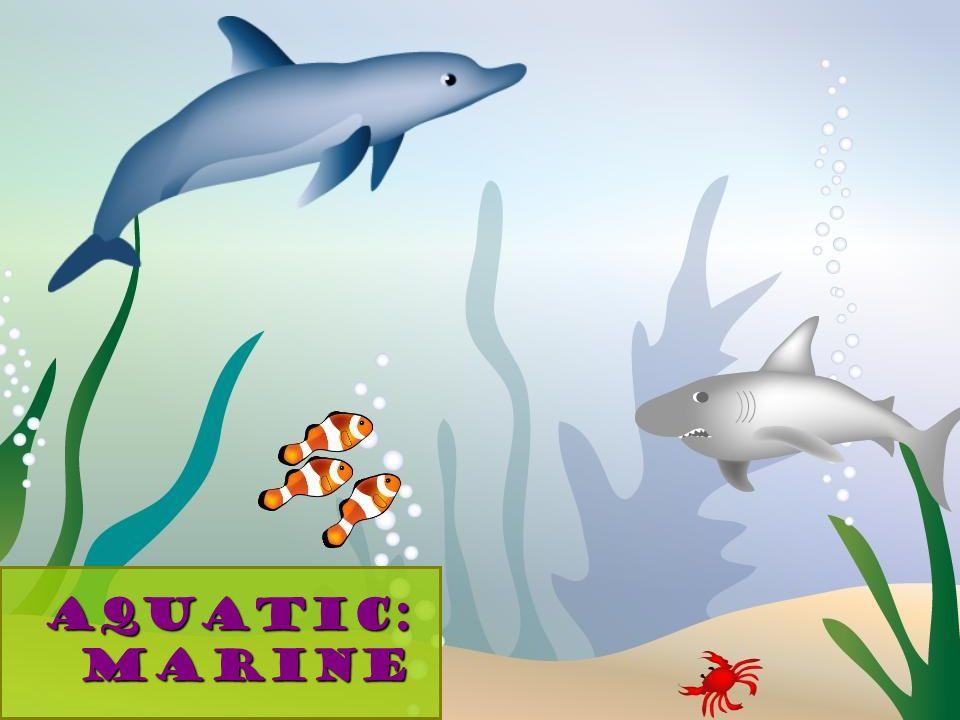 Aquatic: Marine