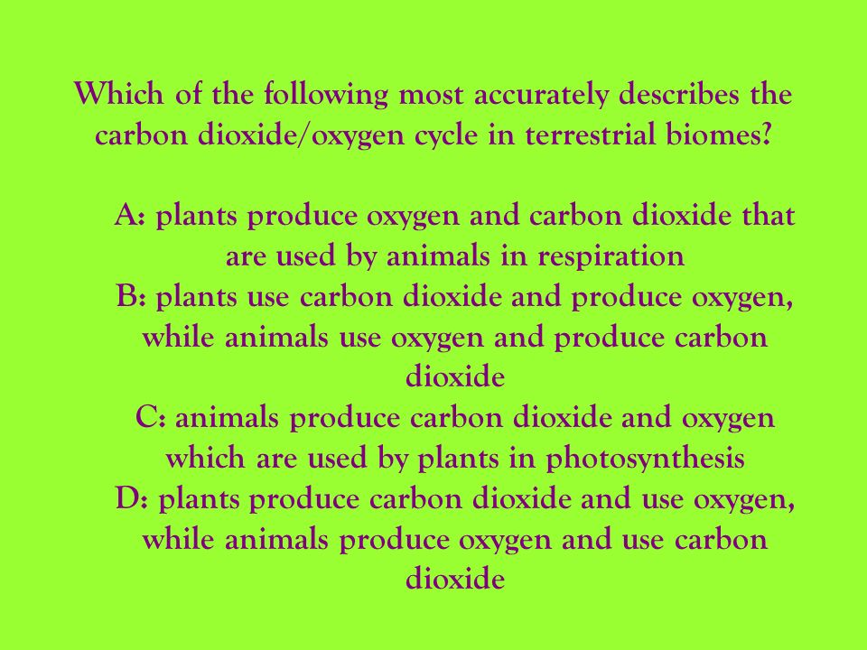 Which of the following most accurately describes the carbon dioxide/oxygen cycle in terrestrial biomes? A: plants produce oxygen and carbon dioxide th
