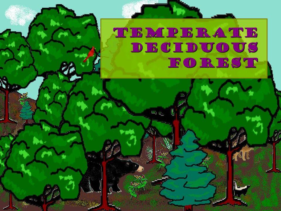Temperate Deciduous Forest