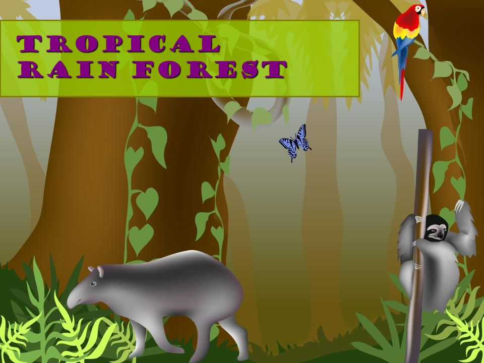 Tropical rain forest Landscape: trees – near equator Climate: hot and very wet Dominant plant life: large trees, vines Dominant animal life: monkeys, insects, mammals, frogs, birds, reptiles