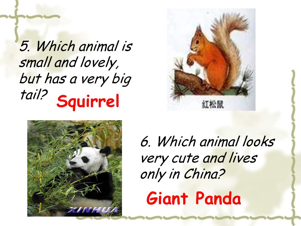 3. Which animal lives in Australia and carries a pocket.