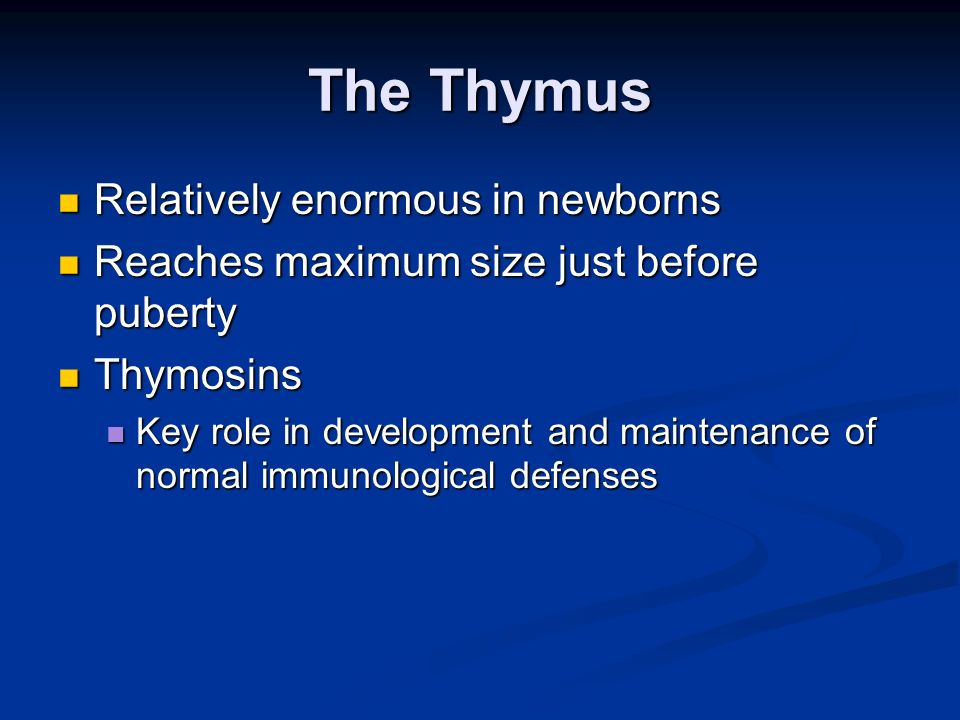 The Thymus Relatively enormous in newborns Relatively enormous in newborns Reaches maximum size just before puberty Reaches maximum size just before p