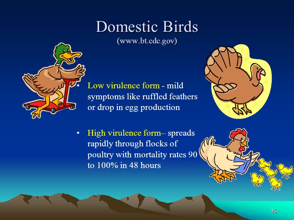15 Domestic Birds (www.bt.cdc.gov) Low virulence form - mild symptoms like ruffled feathers or drop in egg production High virulence form– spreads rap