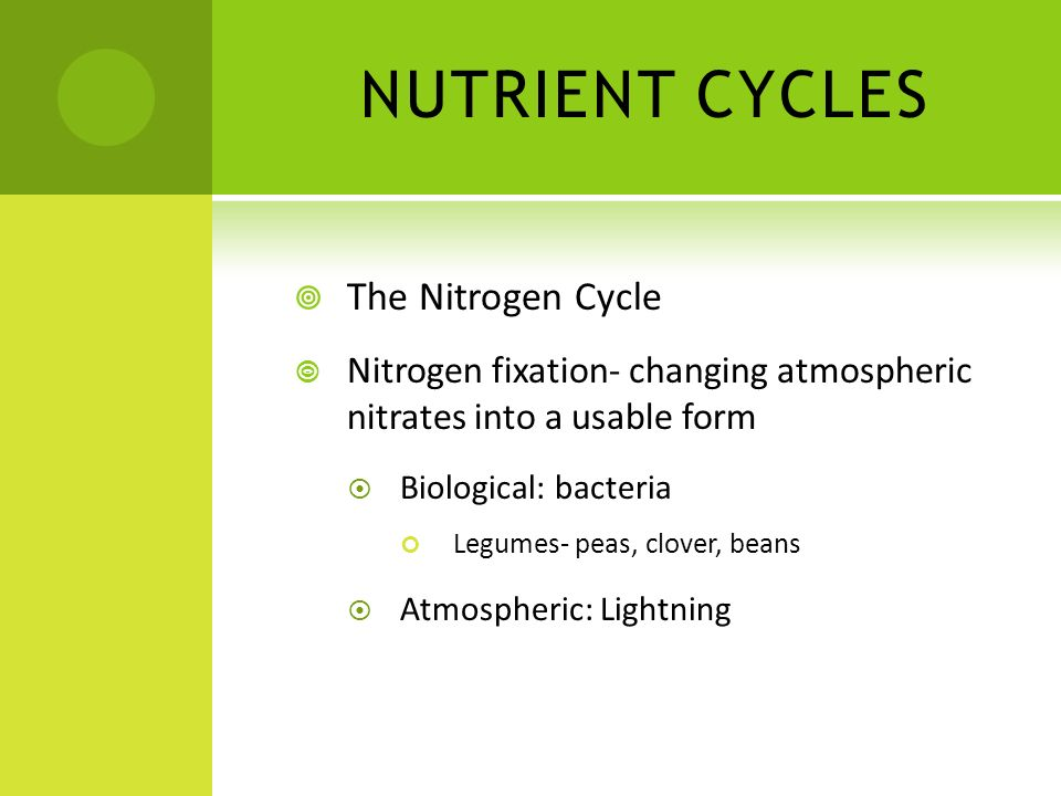 NUTRIENT CYCLES The Nitrogen Cycle Nitrogen fixation- changing atmospheric nitrates into a usable form Biological: bacteria Legumes- peas, clover, bea