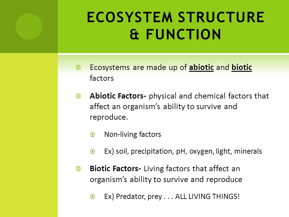 ECOSYSTEM STRUCTURE & FUNCTION Ecosystems are made up of abiotic and biotic factors Abiotic Factors- physical and chemical factors that affect an orga