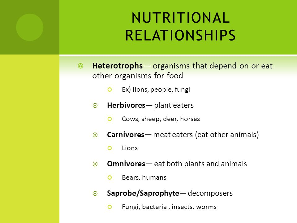 NUTRITIONAL RELATIONSHIPS Heterotrophs organisms that depend on or eat other organisms for food Ex) lions, people, fungi Herbivores plant eaters Cows,