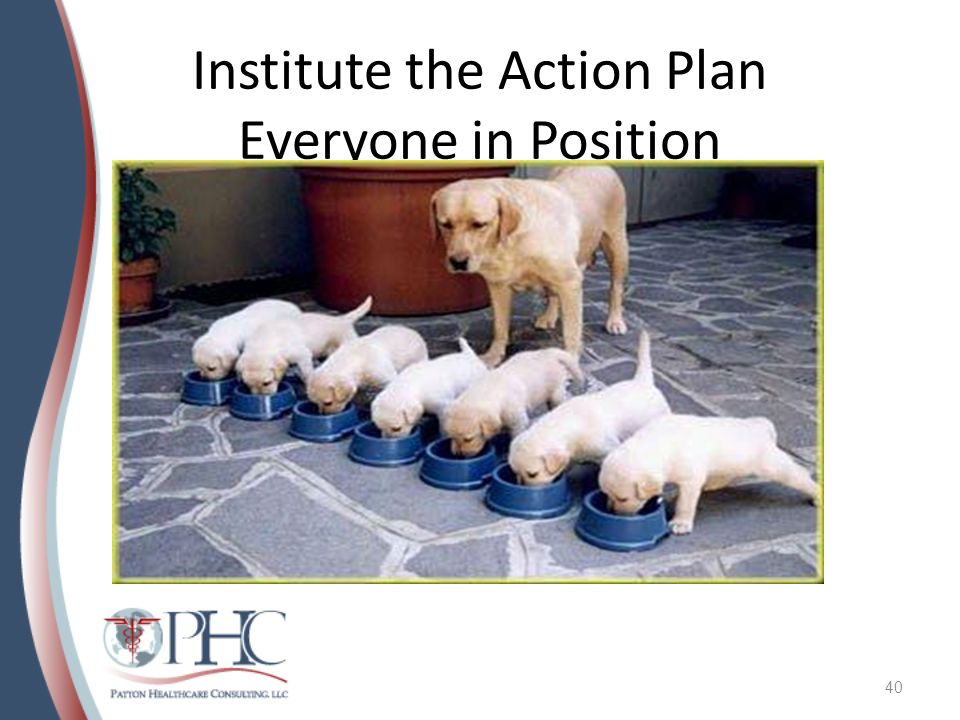 Institute the Action Plan Everyone in Position 40