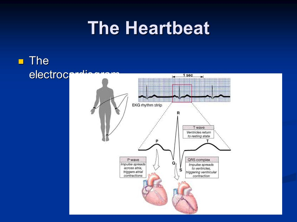 The Heartbeat The electrocardiogram The electrocardiogram