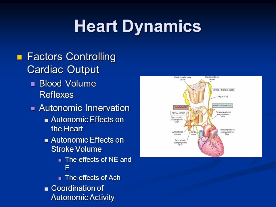 Heart Dynamics Factors Controlling Cardiac Output Factors Controlling Cardiac Output Blood Volume Reflexes Blood Volume Reflexes Autonomic Innervation