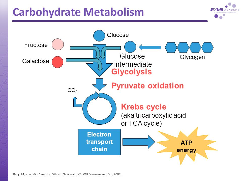 Carbohydrate Metabolism Electron transport chain Glucose CO 2 Pyruvate oxidation Krebs cycle (aka tricarboxylic acid or TCA cycle) ATP energy Galactos