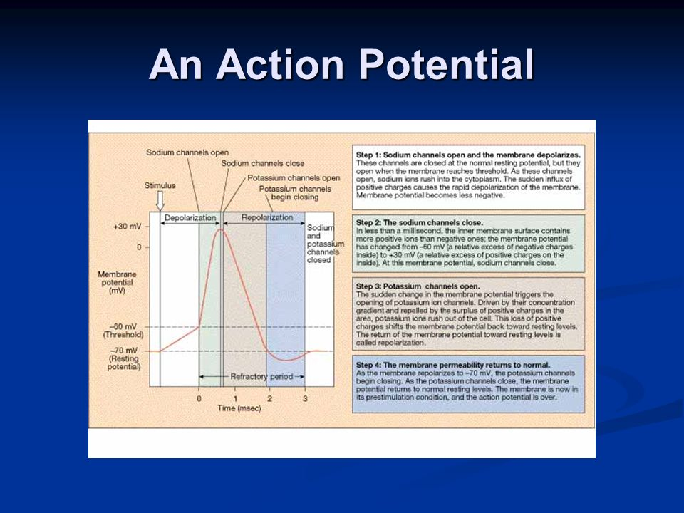 An Action Potential