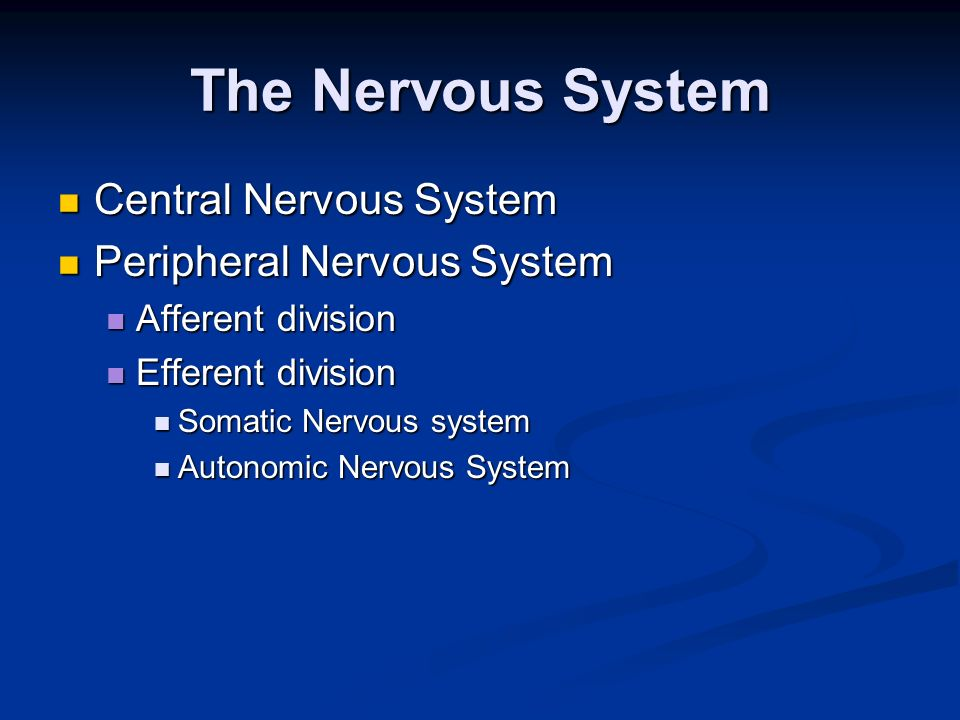 Functional Overview of the Nervous System