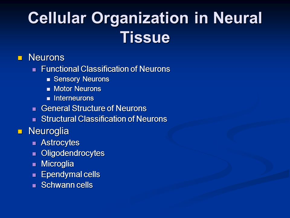 Cellular Organization in Neural Tissue Neurons Neurons Functional Classification of Neurons Functional Classification of Neurons Sensory Neurons Senso