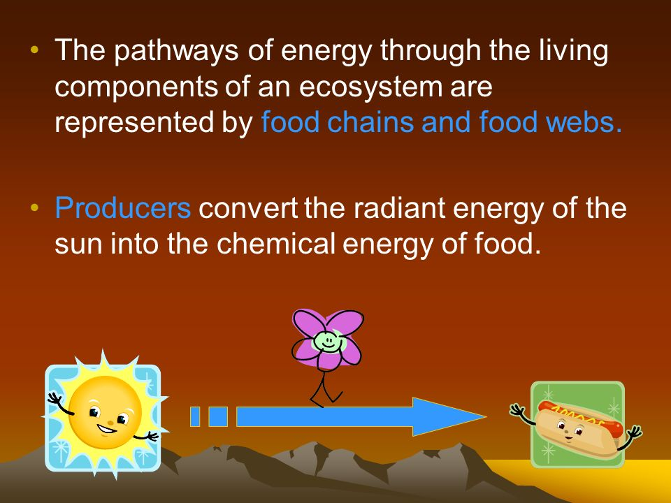The pathways of energy through the living components of an ecosystem are represented by food chains and food webs. Producers convert the radiant energ