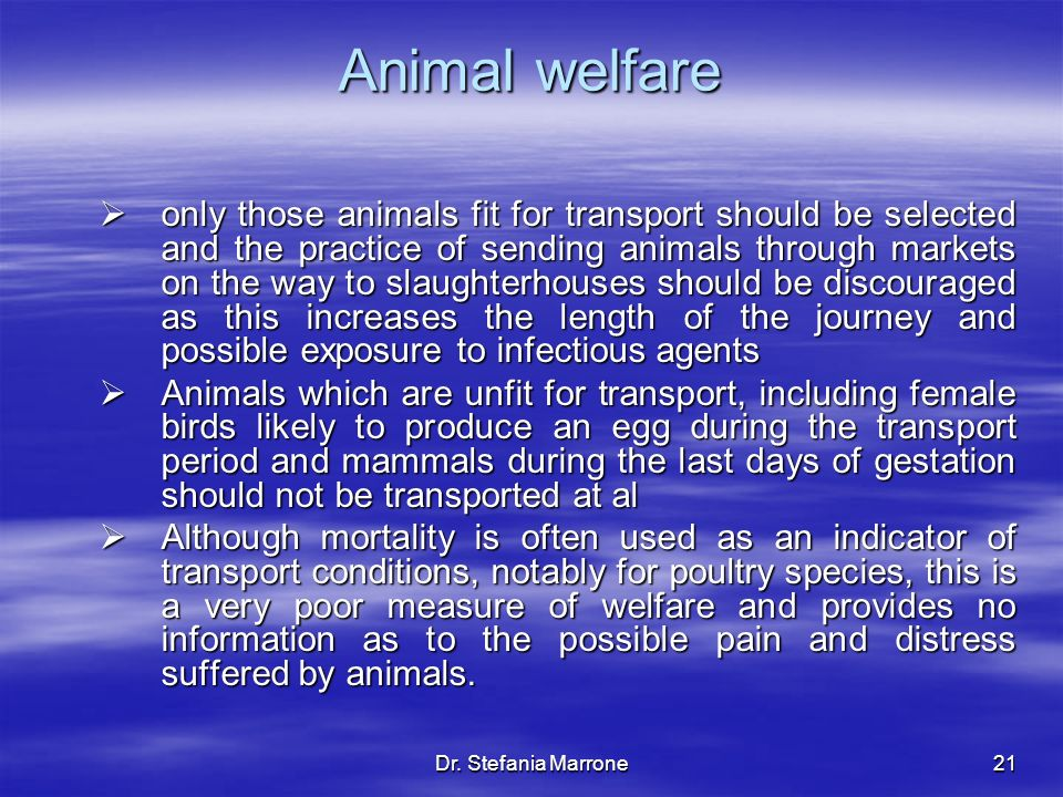Dr. Stefania Marrone21 Animal welfare only those animals fit for transport should be selected and the practice of sending animals through markets on t
