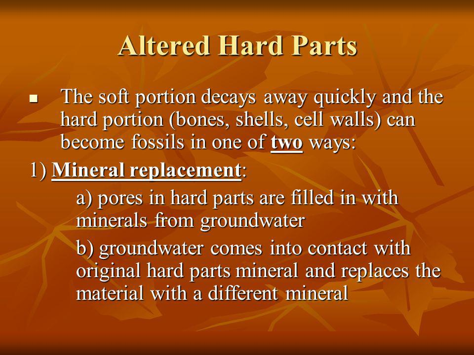 Altered Hard Parts The soft portion decays away quickly and the hard portion (bones, shells, cell walls) can become fossils in one of two ways: The so