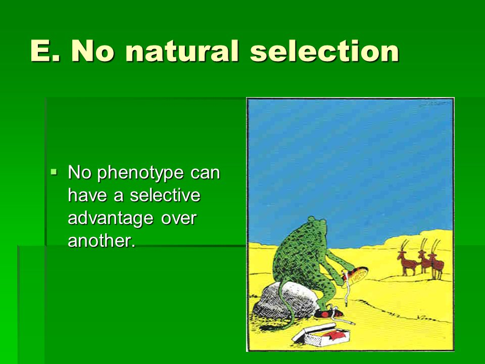 E. No natural selection No phenotype can have a selective advantage over another. No phenotype can have a selective advantage over another.