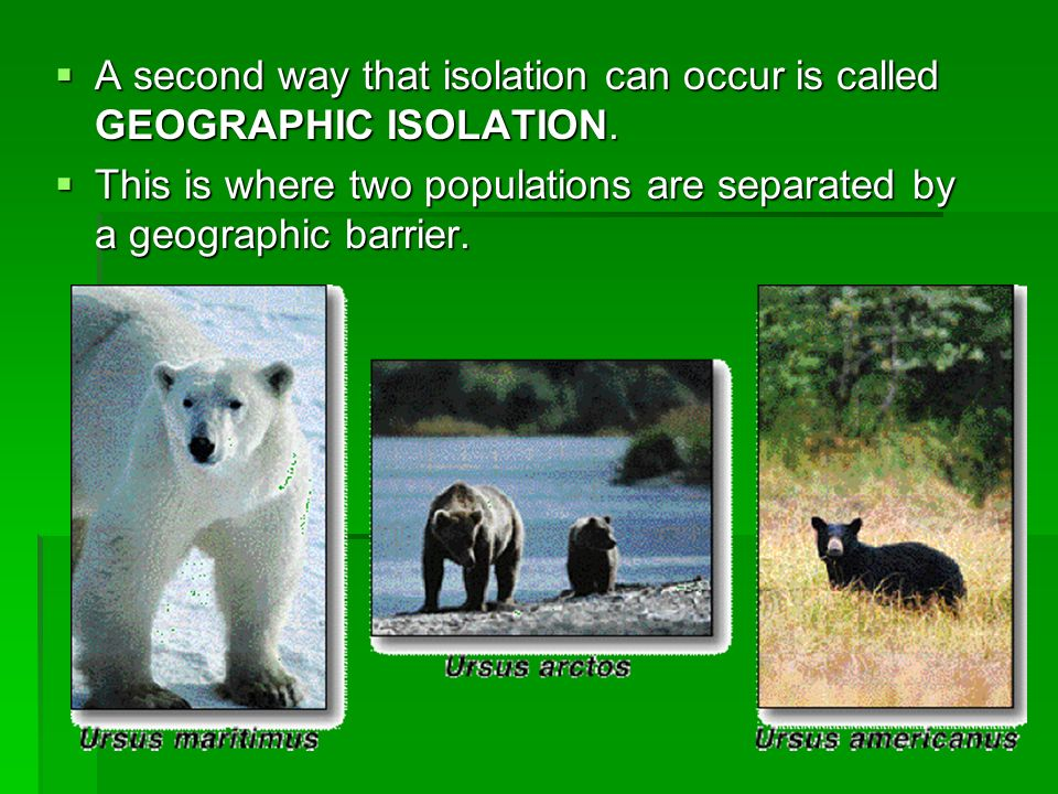 A second way that isolation can occur is called GEOGRAPHIC ISOLATION. A second way that isolation can occur is called GEOGRAPHIC ISOLATION. This is wh
