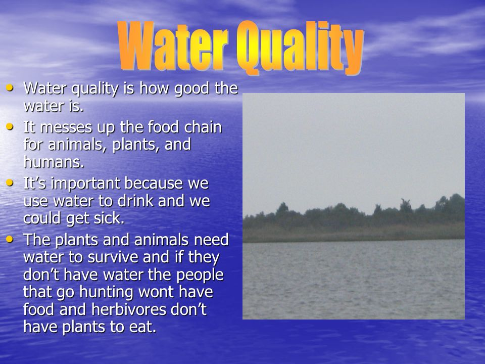 Water quality is how good the water is. Water quality is how good the water is. It messes up the food chain for animals, plants, and humans. It messes