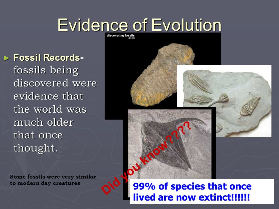 Evidence of Evolution Fossil Records - fossils being discovered were evidence that the world was much older that once thought. Fossil Records - fossil