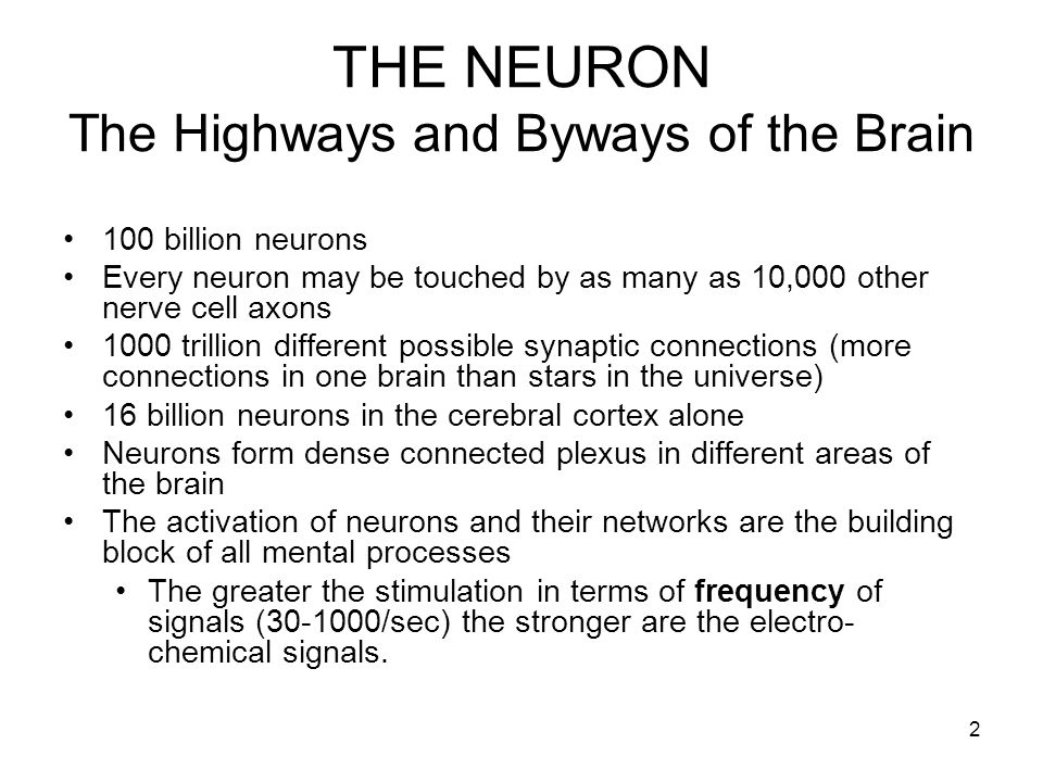 2 THE NEURON The Highways and Byways of the Brain 100 billion neurons Every neuron may be touched by as many as 10,000 other nerve cell axons 1000 tri