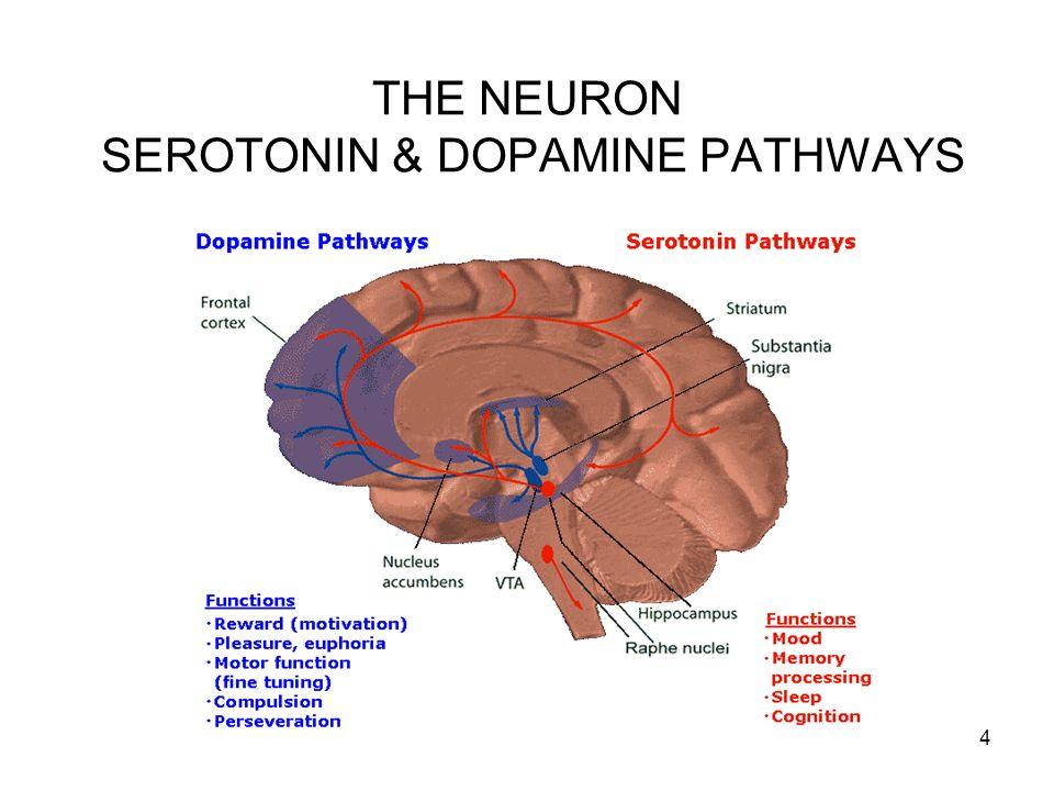 4 THE NEURON SEROTONIN & DOPAMINE PATHWAYS