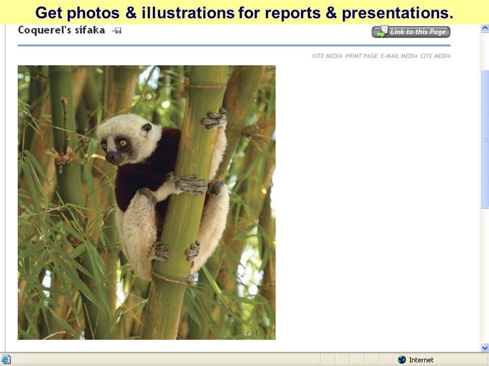 Get photos & illustrations for reports & presentations.