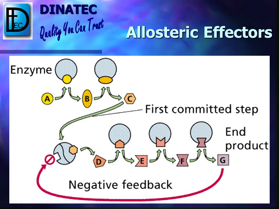 DINATEC Allosteric Effectors Allosteric site is distinct from the active site Allosteric site is distinct from the active site Different molecules can