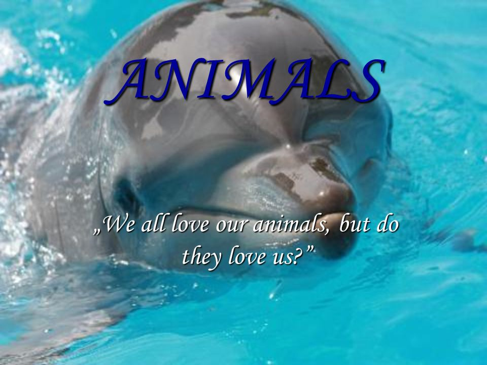 ANIMALS We all love our animals, but do they love us?