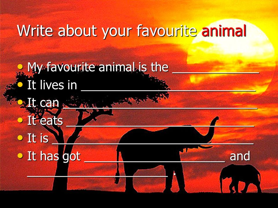 Write about your favourite animal My favourite animal is the _____________ My favourite animal is the _____________ It lives in ______________________