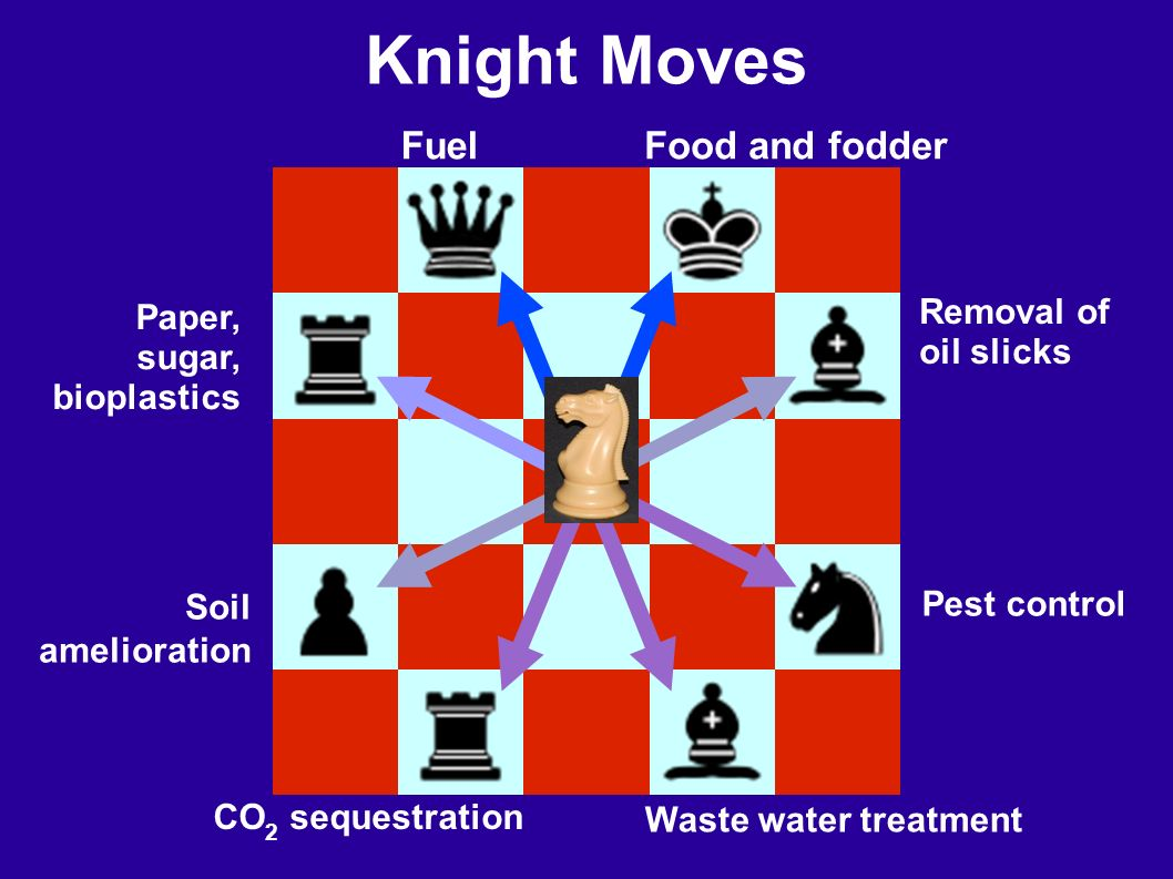 Knight Moves Soil amelioration Waste water treatment Pest control FuelFood and fodder CO 2 sequestration Removal of oil slicks Paper, sugar, bioplastics