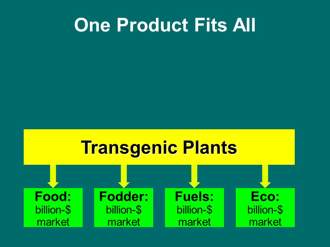 One Product Fits All Food: billion-$ market Fodder: billion-$ market Fuels: billion-$ market Eco: billion-$ market Transgenic Plants