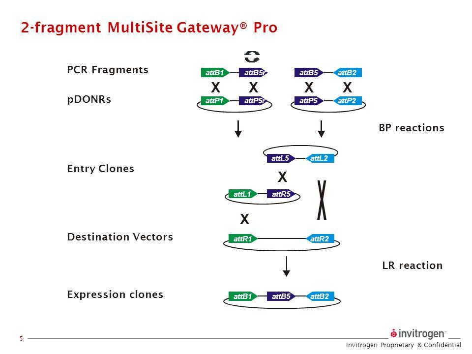 Invitrogen Proprietary & Confidential 5 XXXX X X attB2attB5 attP2attP5 attR2attR1 attB5rattB1 attP5rattP1 attL5 attL1 attB2attB5attB1 attL2 attR5 PCR