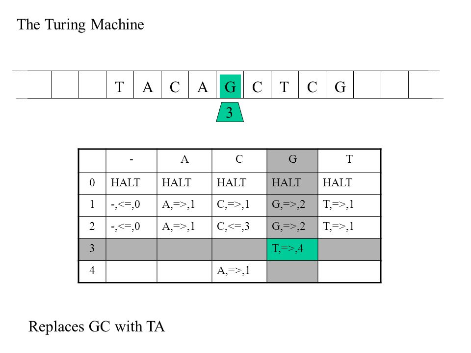 The Turing Machine AACGCTTGC 3 -ACGT 0HALT 1-,<=,0A,=>,1C,=>,1G,=>,2T,=>,1 2-,<=,0A,=>,1C,<=,3G,=>,2T,=>,1 3T,=>,4 4A,=>,1 Replaces GC with TA