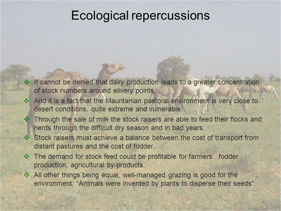 Ecological repercussions It cannot be denied that dairy production leads to a greater concentration of stock numbers around elivery points. And it is