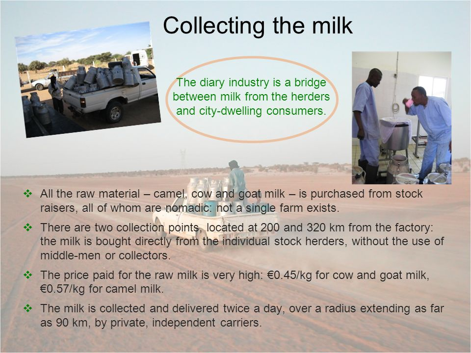 Collecting the milk All the raw material – camel, cow and goat milk – is purchased from stock raisers, all of whom are nomadic: not a single farm exists.