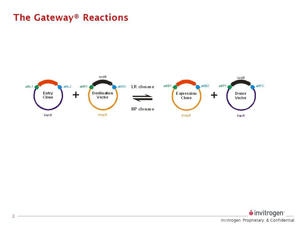 Invitrogen Proprietary & Confidential 2 The Gateway® Reactions