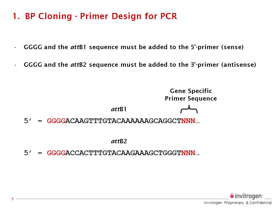 Invitrogen Proprietary & Confidential 5 1.BP Cloning - Primer Design for PCR GGGG and the attB1 sequence must be added to the 5-primer (sense) GGGG an