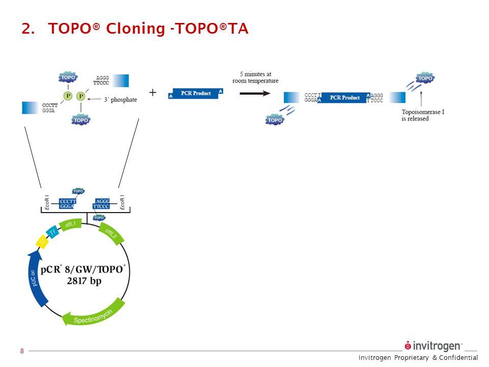 Invitrogen Proprietary & Confidential 8 2.TOPO® Cloning -TOPO®TA