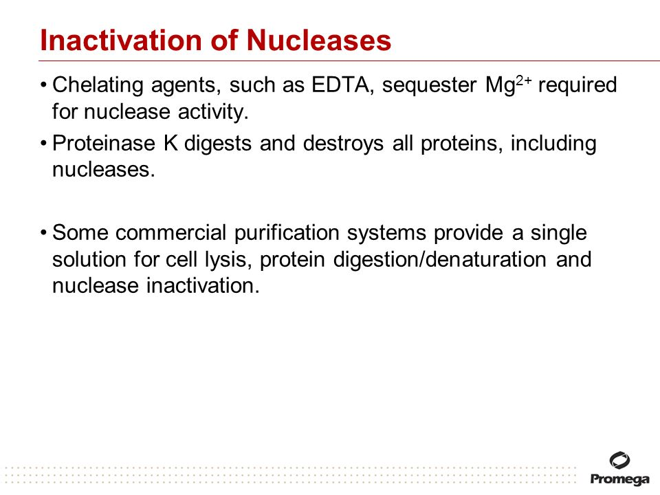 Inactivation of Nucleases Chelating agents, such as EDTA, sequester Mg 2+ required for nuclease activity. Proteinase K digests and destroys all protei