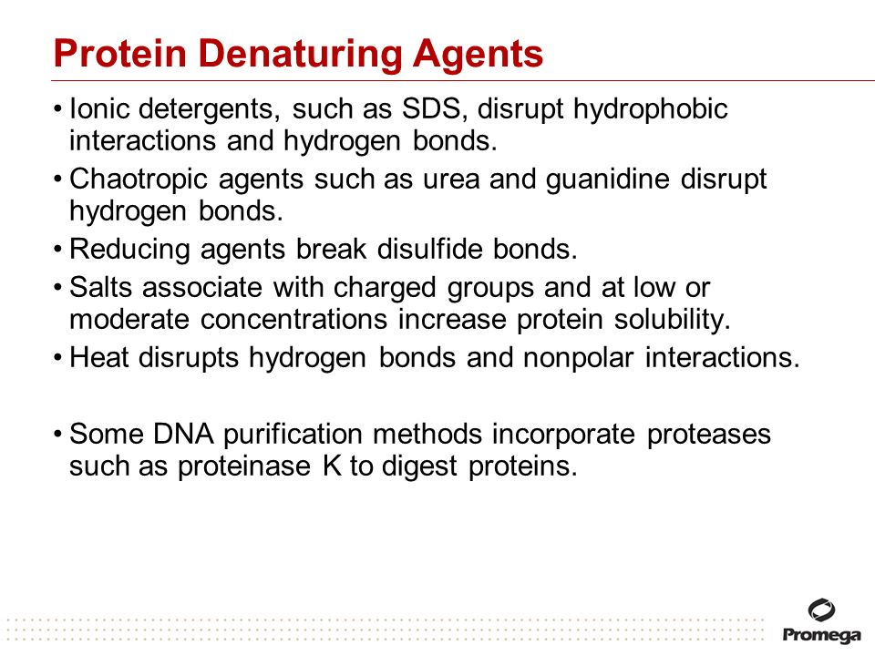 Protein Denaturing Agents Ionic detergents, such as SDS, disrupt hydrophobic interactions and hydrogen bonds. Chaotropic agents such as urea and guani
