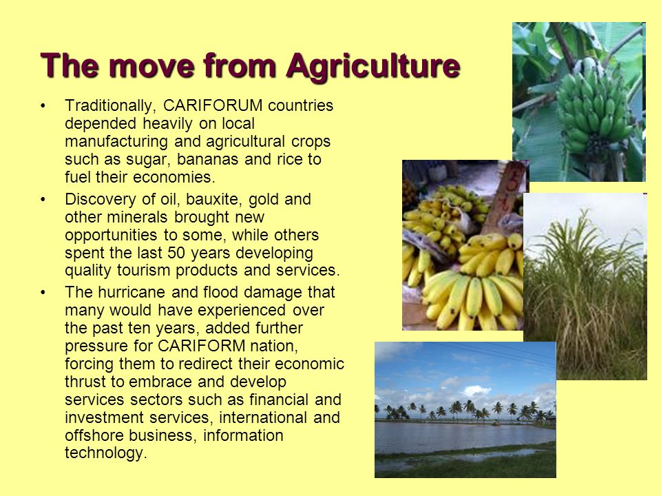 The move from Agriculture Traditionally, CARIFORUM countries depended heavily on local manufacturing and agricultural crops such as sugar, bananas and