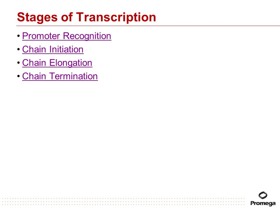 Stages of Transcription Promoter Recognition Chain Initiation Chain Elongation Chain Termination