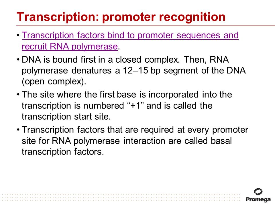 Transcription: promoter recognition Transcription factors bind to promoter sequences and recruit RNA polymerase.Transcription factors bind to promoter