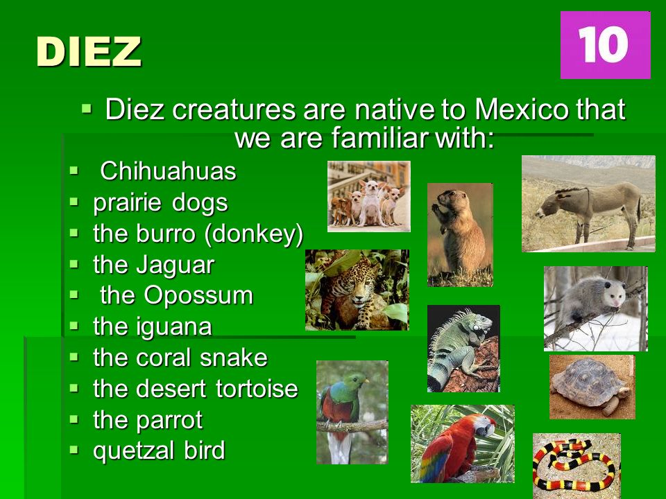DIEZ Diez creatures are native to Mexico that we are familiar with: Diez creatures are native to Mexico that we are familiar with: Chihuahuas Chihuahuas prairie dogs prairie dogs the burro (donkey) the burro (donkey) the Jaguar the Jaguar the Opossum the Opossum the iguana the iguana the coral snake the coral snake the desert tortoise the desert tortoise the parrot the parrot quetzal bird quetzal bird