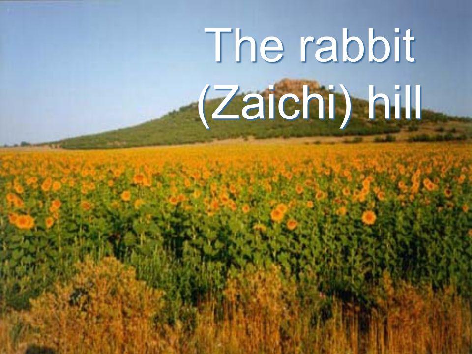 The rabbit (Zaichi) hill